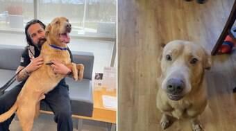 Cão viaja 1.325 km e reencontra o dono 5 anos após ter desaparecido