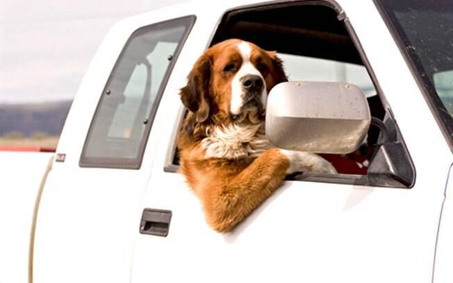 Dicas para levar seu cachorro no carro com segurança