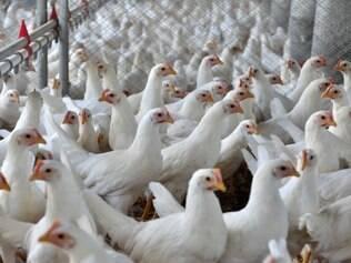 A chegada de milhares de turistas ao Brasil para a Copa do Mundo gera expectativa para recuperação do mercado de carne de frango no país
