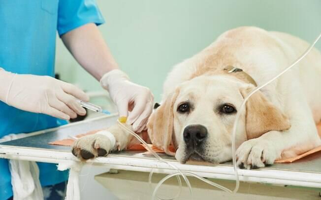 Infelizmente, não tem como prever se o cachorro irá se curar de um tumor hormonal. A precisão do tratamento, a duração e o prognóstico variam conforme o nível da doença
