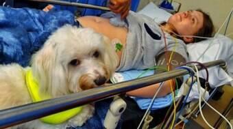 Cãozinho ajuda sua dona a dar à luz após três tentativas frustradas