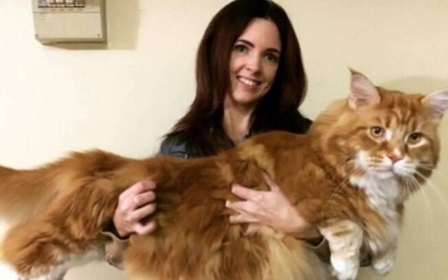 Gato de 120 centímetros concorre ao título de maior do mundo!