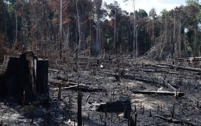 Desmatamento da floresta amazônica é alvo de críticas por ambientalistas