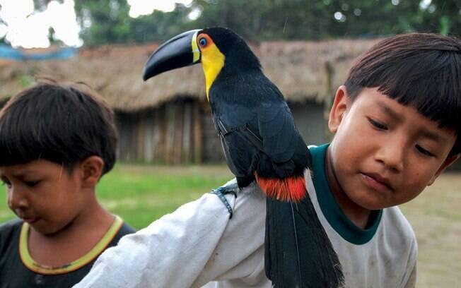 Crianças da Reserva Índigena Guarani do Rio Silveira, com futuro incerto: cotas indígenas no ensino superior não é lei
