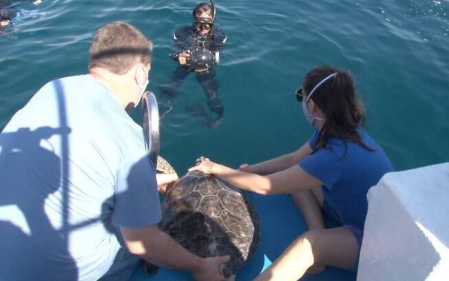 As tartarugas estavam em tratamento no Aquário há dois anos.