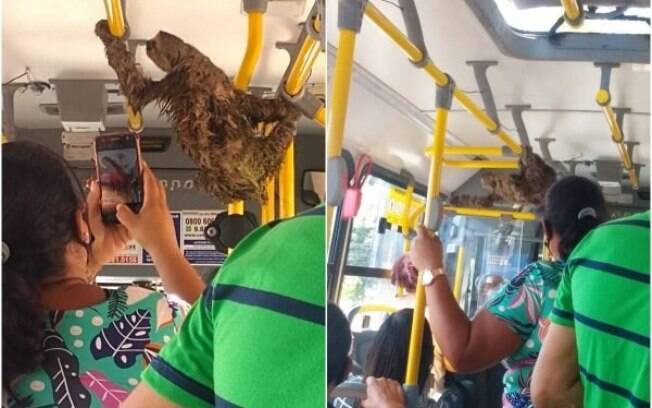 Bicho-preguiça andando de ônibus no Recife