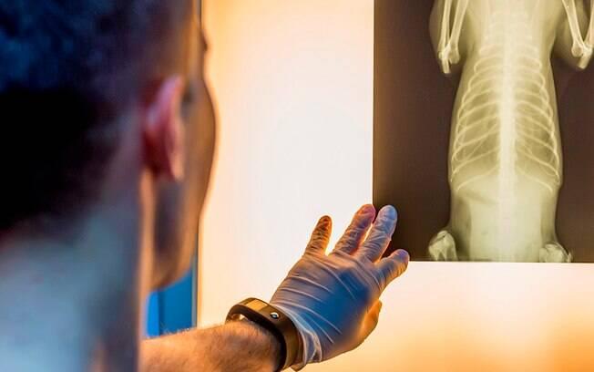 O raio X pode ser uma importante fonte de diagnóstico para os donos de animais.