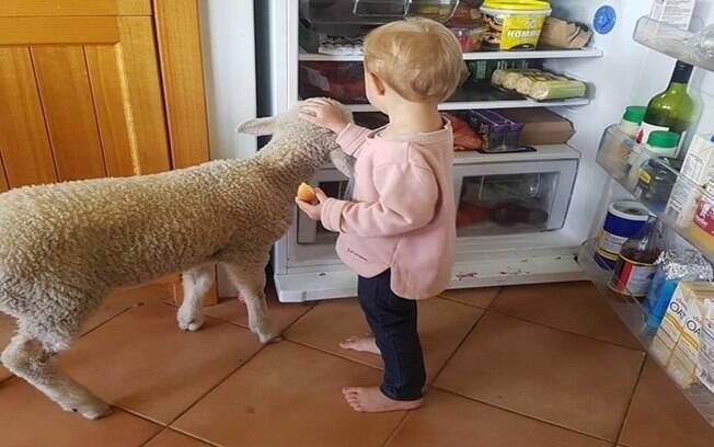 Pikelet e Aurora assaltando a geladeira