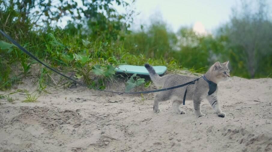 Passear com o gato na coleira pode ser uma forma de estar mais perto do animal
