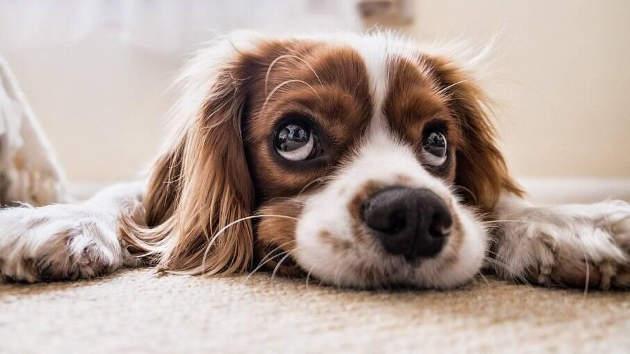 Os bigodes dos cães os ajudam a perceber o mundo