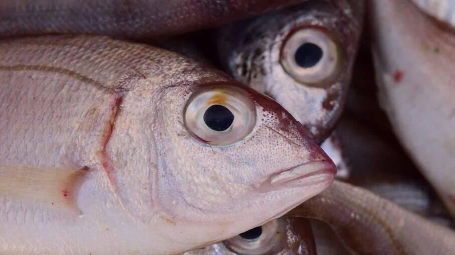 Doença de Haff é conhecida por deixar o xixi preto e está associada ao consumo de peixes