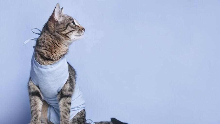 Gatos castrados necessitam de uma dieta especial