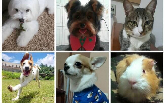 Cachorros, gatos, porquinhos da índia e mais: leitores do iG enviaram fotos dos seus animais de estimação; confira