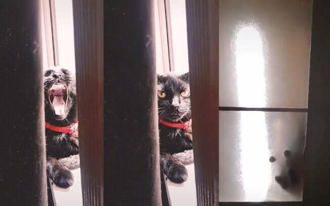Gato fica preso em luminária