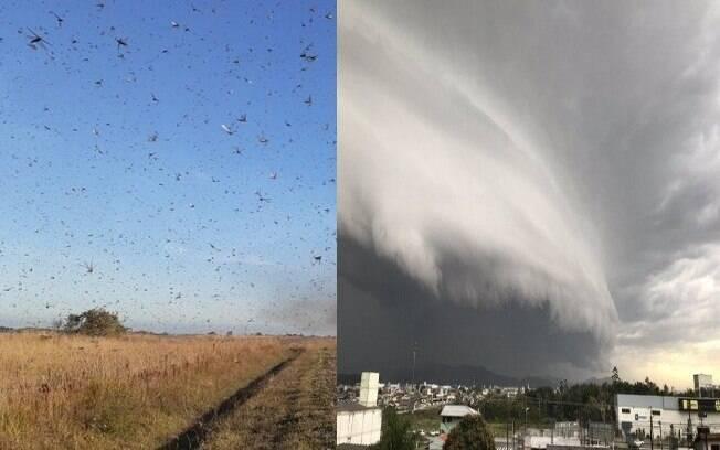 ciclone e gafanhotos