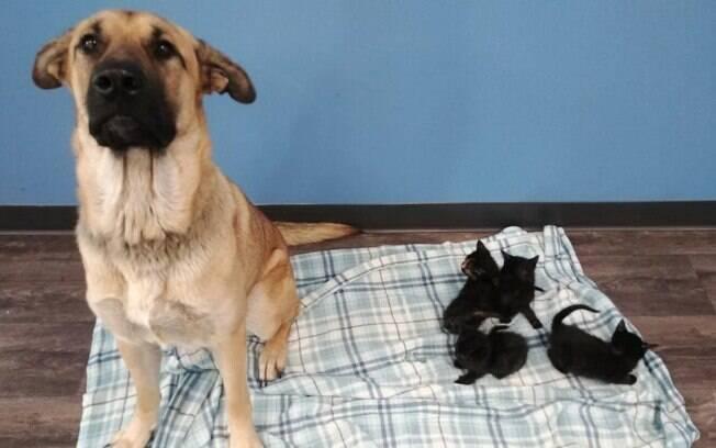 Cadela e filhotes de gato resgatados
