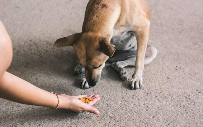 Para conseguir a atenção do animal, uma ideia é oferecer alguns petiscos, já que esses animais costumam comer pouco