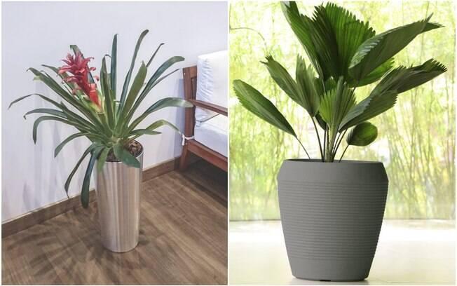 Plantas maiores exigem mais espaço para o crescimento das raizes