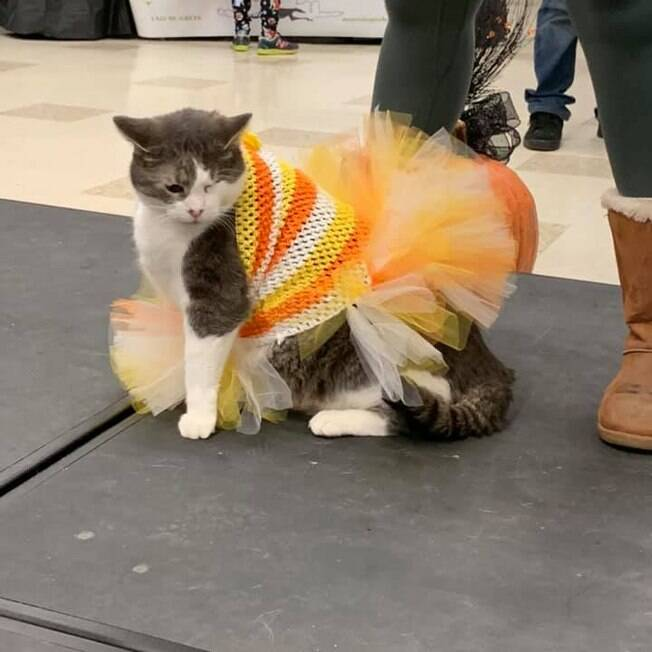 gato corajoso