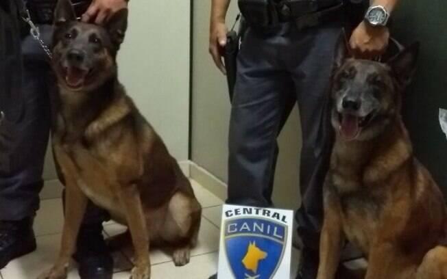 Cães Policiais Euro e Anubis do Canil do Batalhão de Choque da Polícia Militar foram responsáveis pela apreensão