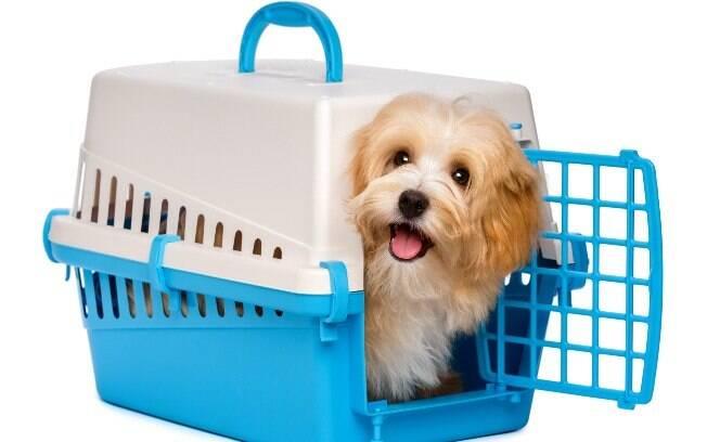 Normalmente, a caixa de transporte é muito atrativa para os animais