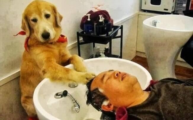 Cachorro agindo como cabeleireiro.