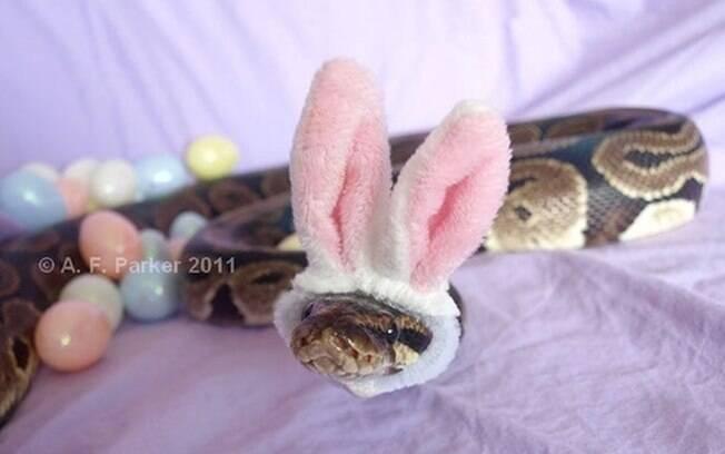 Pra quem gosta de coelhos, uma cobra com orelhas de coelhinho.