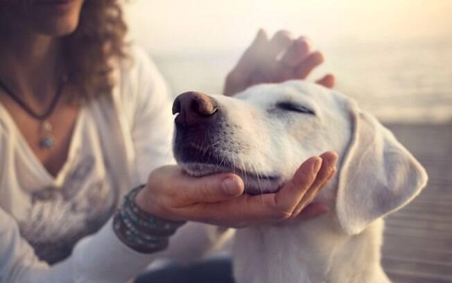 Usuário consegue cadastrar alguns aspectos do seu animal no aplicativo como alergias, problema de saúde ou preferência de produtos, para garantia de um serviço mais personalizado