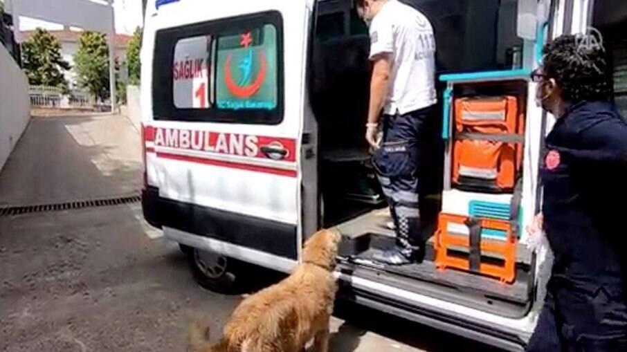 Cachorro seguiu a dona até ao hospital ao lado da ambulância
