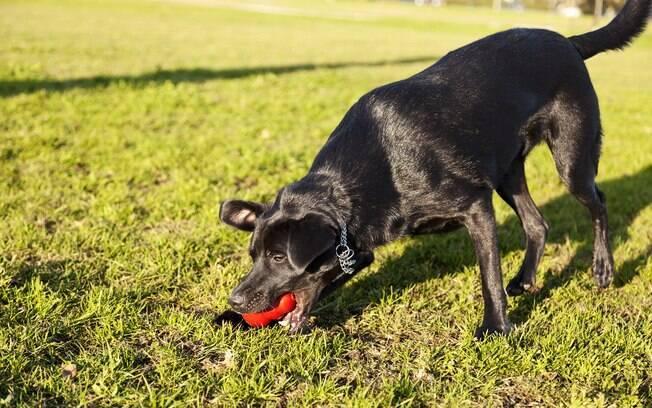 Colocar a ração dentro de um brinquedo pode ser uma opção para melhorar a falta de apetite do cachorro