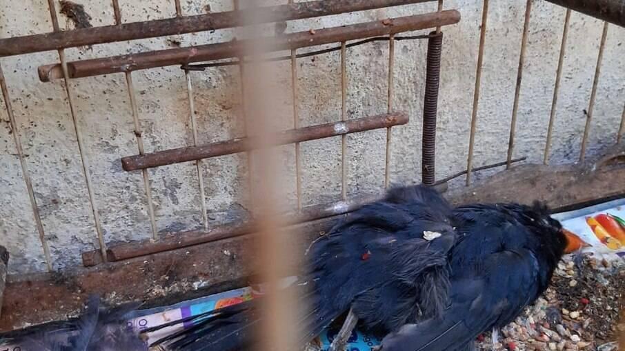 Cerca de 600 animais morrem em centro de tratamento do Ibama no RJ