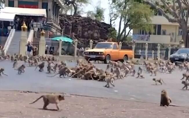 Brigas entre os animais aumentaram pela escassez de comida nas ruas da Tailândia