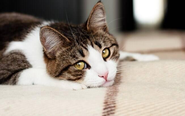 Cães e gatos podem ficar mais estressados durante o período de isolamento físico
