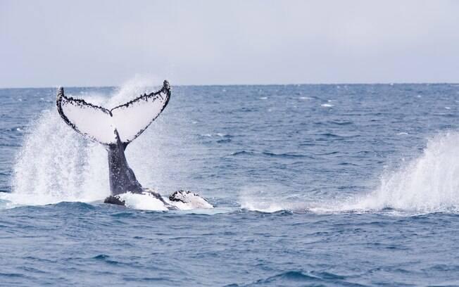 Os animais marinhos começam a popular o litoral brasileiro nessa época do ano, e não faltam pontos para observá-los