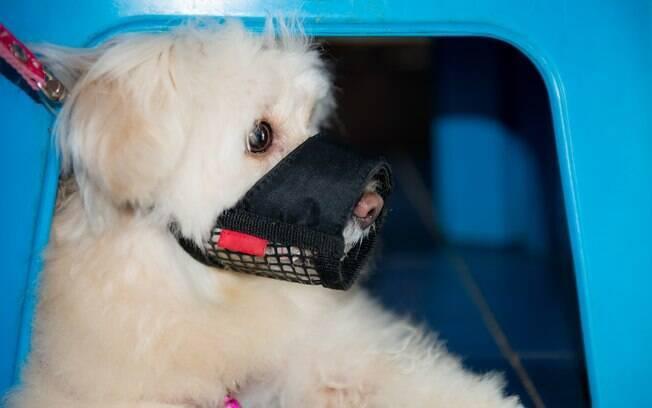 Se ainda tem receito que seu cão ataque outro, use uma focinheira durante os passeios. O objeto irá garantir que ninguém se machuque