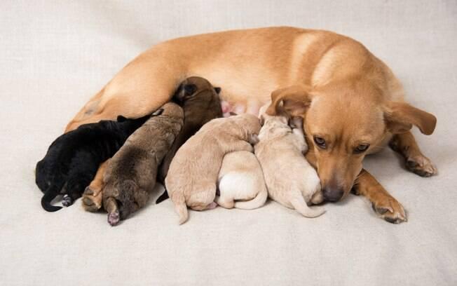 Não é recomendado que a cadela tome banho antes da primeira semana pós-parto por causa do estresse já vivido. Forçá-la a ser limpa nesse período só irá deixá-la mais esgo