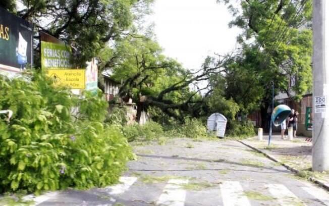 Temporal em Porto Alegre derruba árvores e deixa milhares de residências sem luz