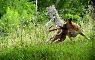 Imagem de cão lutando com cobra venenosa faz sucesso nas redes sociais - Mundo Insólito - iG