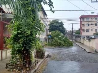 No último de fim de semana, uma árvore de grande porte caiu em cima de um ponto de ônibus, na mesma rua da denunciante