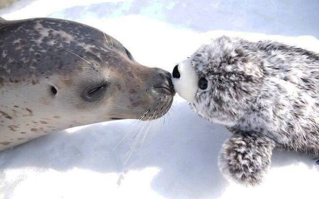 A foca fofa se apaixonou pelo bichinho de pelúcia
