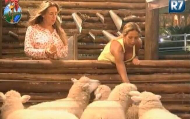 Valesca e Joana dão comida na boca para as ovelhas