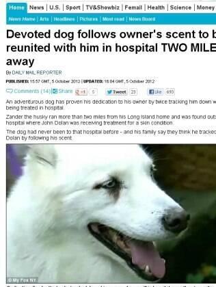 Cachorro anda cinco quilômetros para encontrar dono