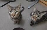 Casal descobre segredo de seu gato após a morte do bichano