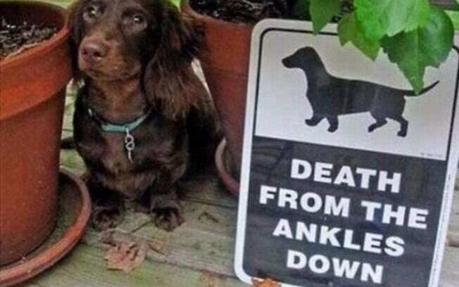 Se você tem amor pela sua vida, cuidado com esse cachorrinho.