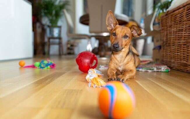 Você sabia que brinquedos sujos podem causar problemas intestinais no seu cachorro?