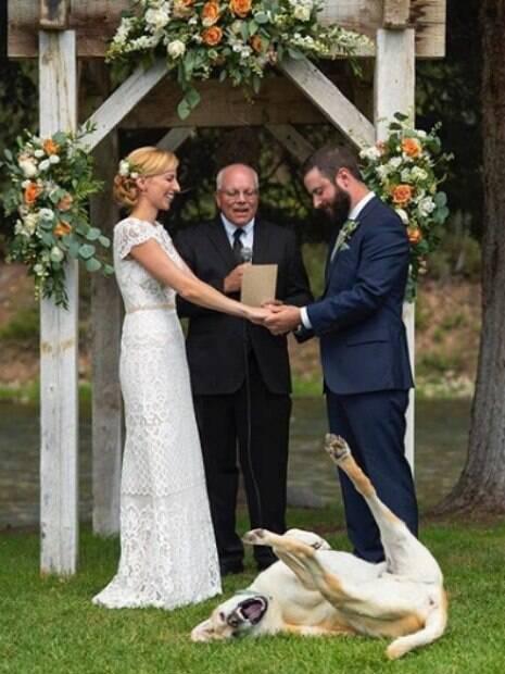 O fotógrafo Chris Davis registrou o exato momento em que o Labrador  rolou na grama e arruinou a cerimônia. A imagem foi parar nas redes sociais e viralizou