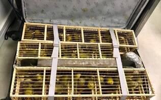 Homem é preso com mais de 200 pássaros dentro de duas malas em Brasília