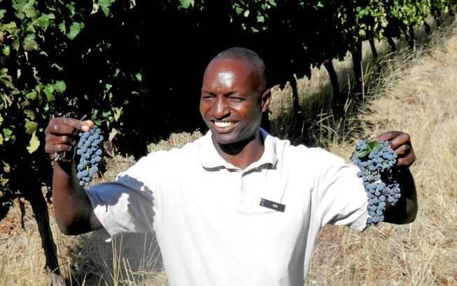 O guia Ted Kwelepeta segura cachos da uva Cabernet Sauvignon