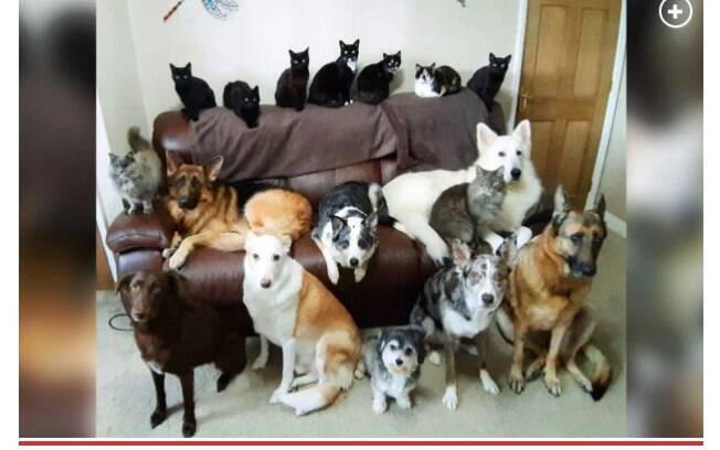 Os 17 animais de Kathy posando junto para a foto