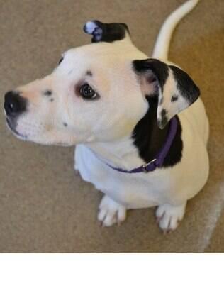 Lucy teve muta sorte. Sua orelha especial chamou atenção, e hoje ela possui uma casa para morar.
